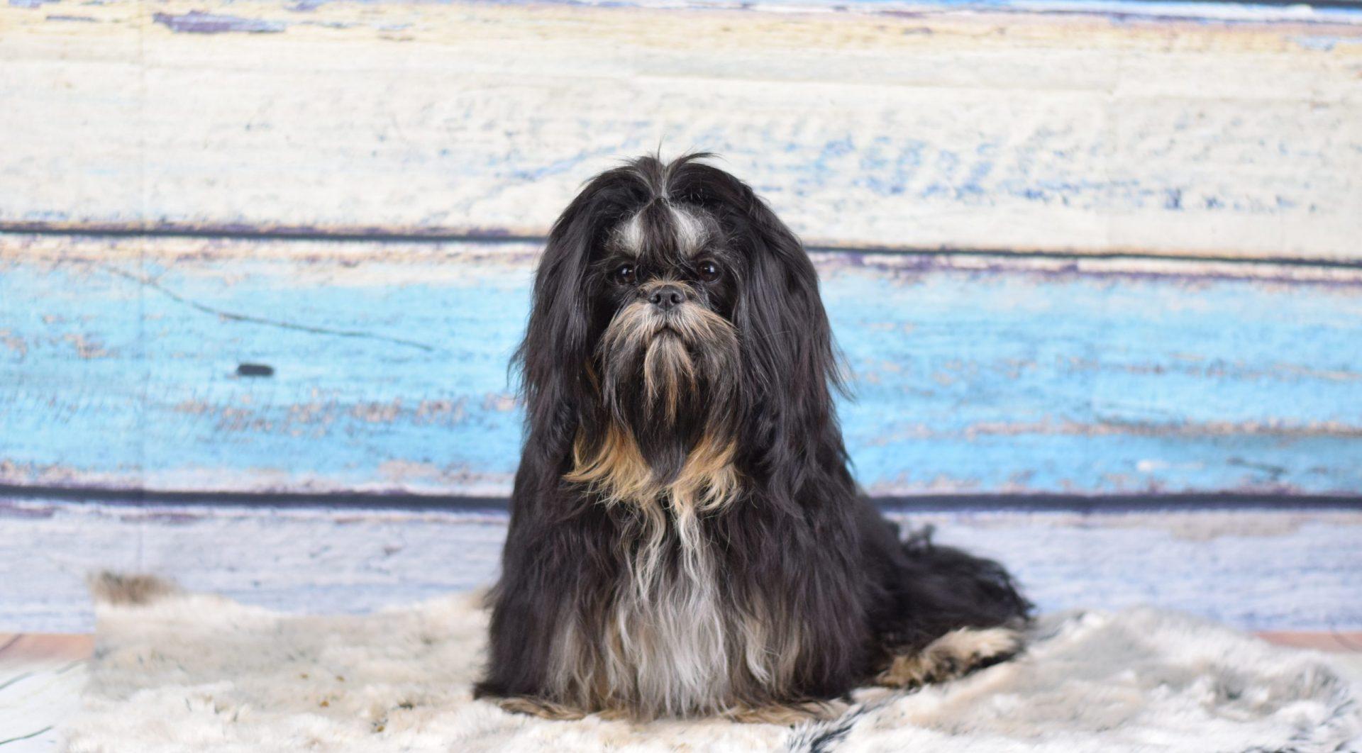 Hundezucht Niederösterreich